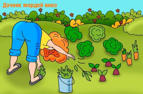 Любимая поза всех садоводов Дачник мордой вниз