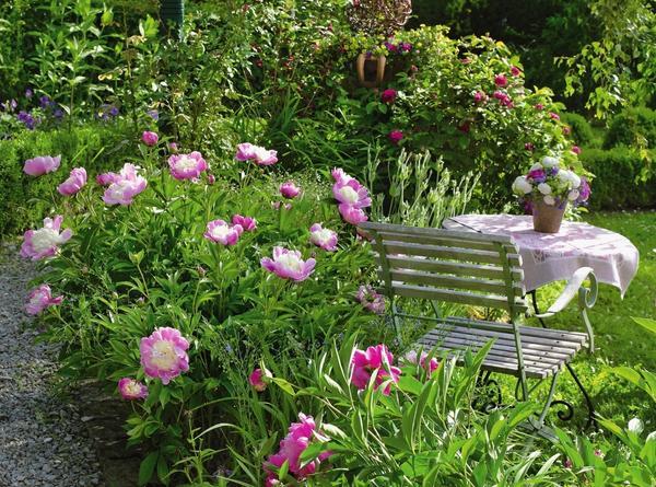Эффектно украшают сад похожие на блюдца цветки сорта Bowl of Beauty с большим количеством тычинок
