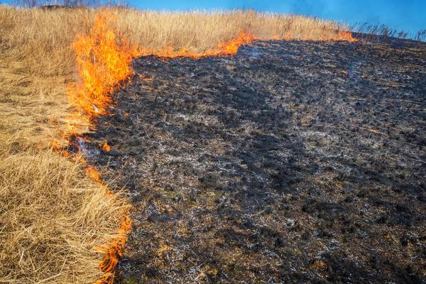 Не выжигайте по весне сухую траву