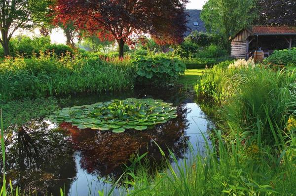 Разнообразные влаголюбивые растения, такие как аир болотный, таволга вязолистная и астильбоидес пластинчатый обрамляют садовый пруд, оставляя только небольшой проход к нему