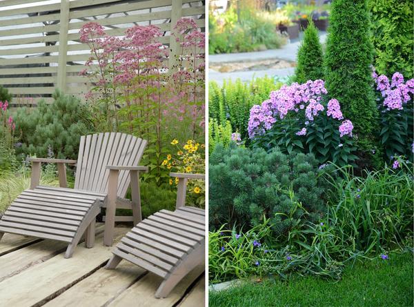 Условно весь ассортимент садовых культур можно разделить на растения заднего, среднего и переднего плана