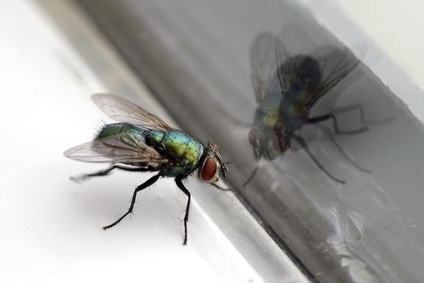 От мух слишком много проблем