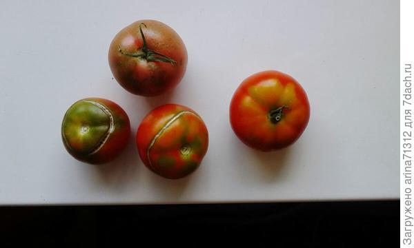 томатики из теплички