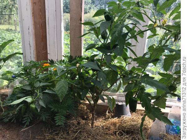 Переезд растений на зиму с огорода: как не занести домой вредителей?