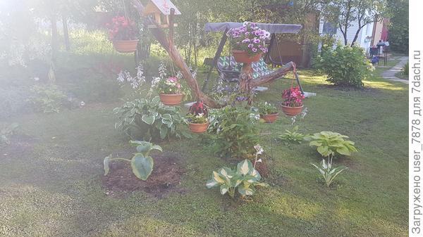 вот, может разглядите, клематис у коряги цветет
