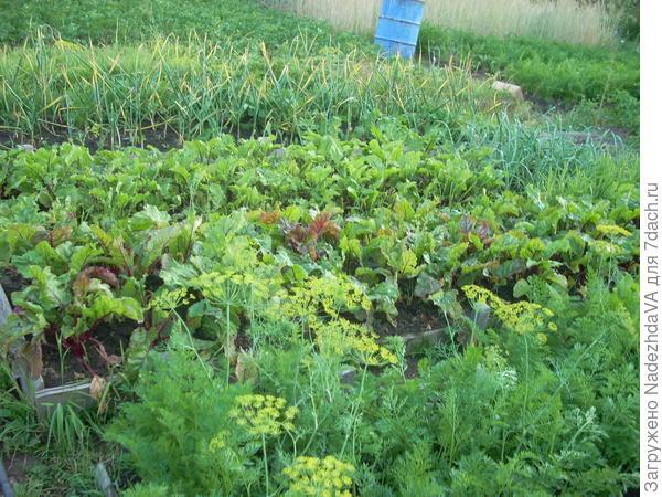 грядочки, фото из первого сада, эх ностальгия)