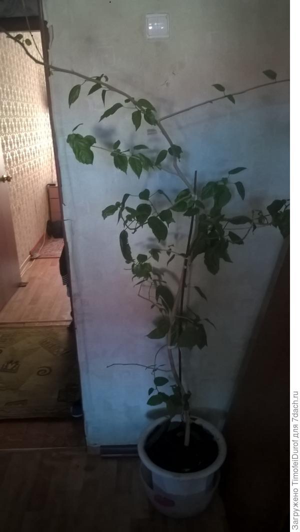 как называется данное растения