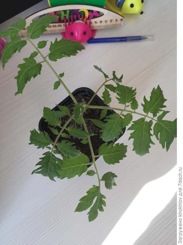 Листочки КОТИ узорчаты словно листочки рябинки