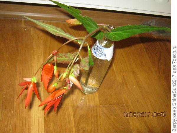 растение для определения названия