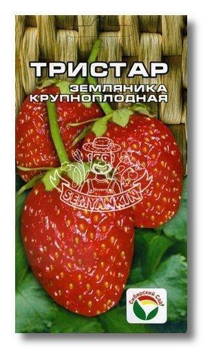 """Земляника """"Тристар"""""""
