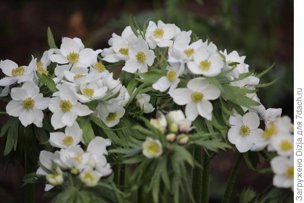 Цветок неизвестного мне растения