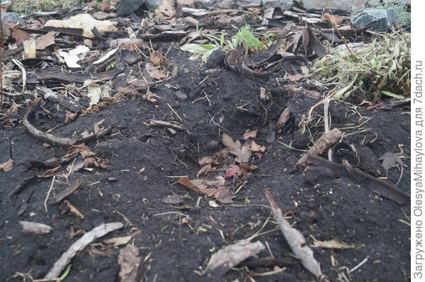 Это цветник. Здесь была большая кротовья нора. Новых кротовин нет.