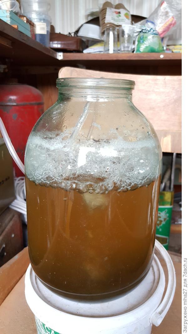 1. Половина ч/л мелассы, пол стакана компоста (3год.) - 36 часа