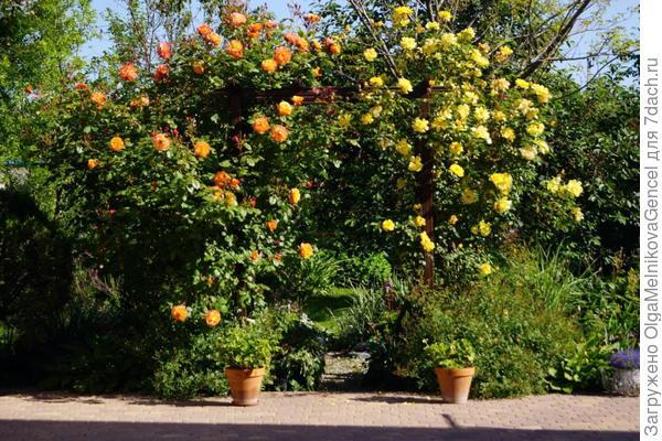 Вход в сад, пергола с розами