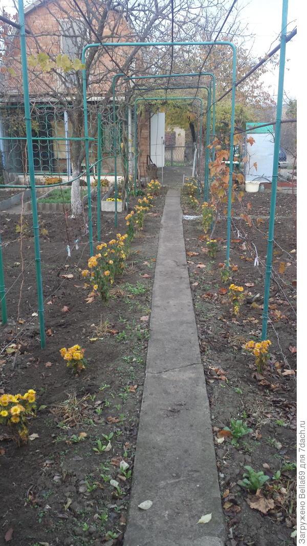 Сегодня пересаживала цветочки ,пчелки сидели на каждом цветке, денек удался было +15.жду заморозков,чтобы посеять морковь.
