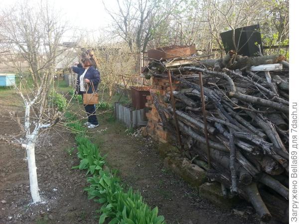 Хозяева накопили много дров