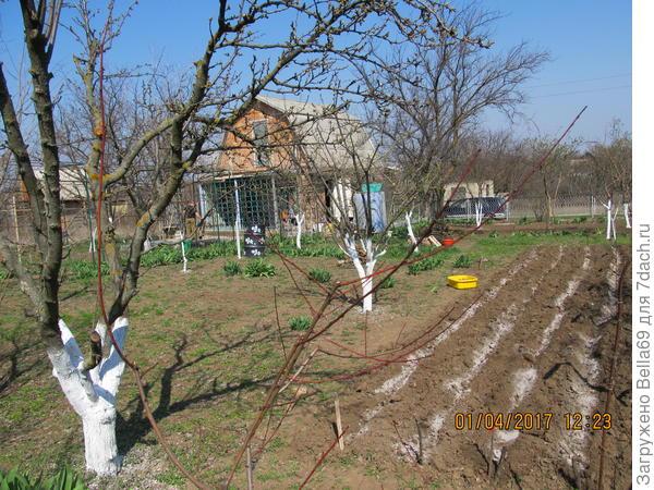 1 апреля я уже сажала картошку