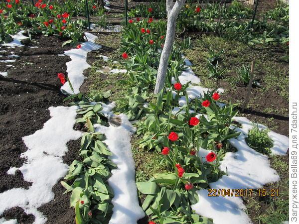 неожиданность было выпадение снега в конце апреля