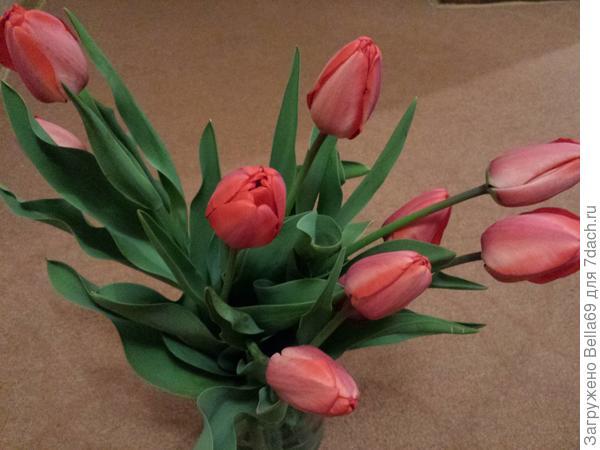 Домой увозили букеты  из тюльпанов