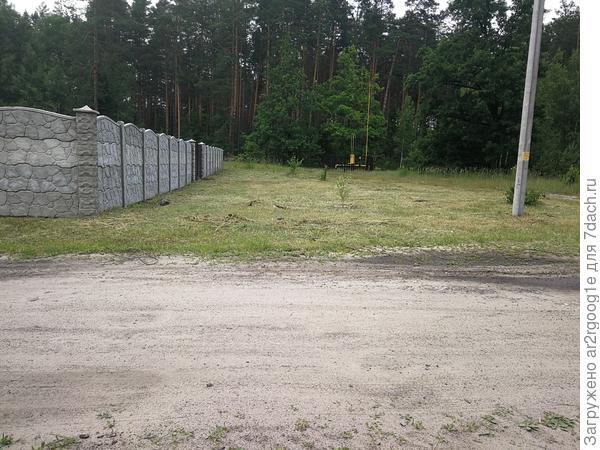 Первый куст, между забором и столбом
