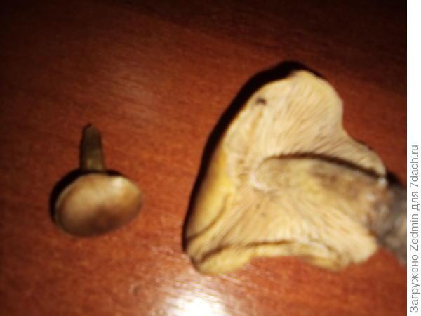 непонятные грибы