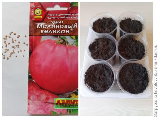 """Семена и посевные стаканчики  томатов""""Малиновый великан"""""""