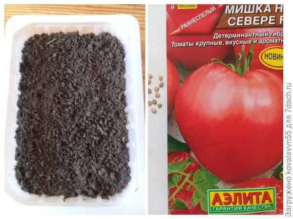 """Семена и посевная емкость томата """"Мишка на Севере"""""""