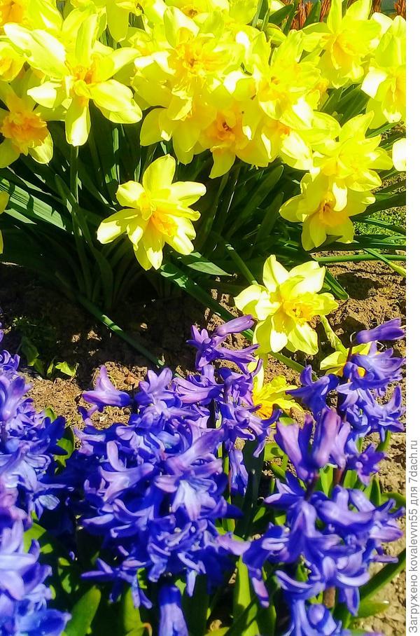 Яркие краски весенних цветов