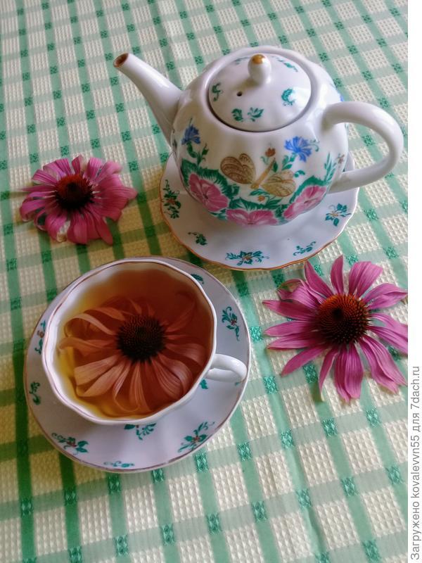 Чай из свежесорванных цвеов эхинацеи имеет приятный бальзамический вкус