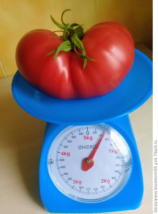 Вес томата Малиновый великан