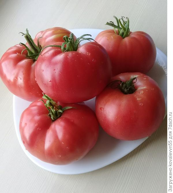 томат малиновый гигант отзывы фото правдивы, могу