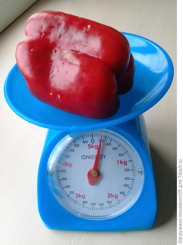 Вес первого созревшего перца Дед Мороз