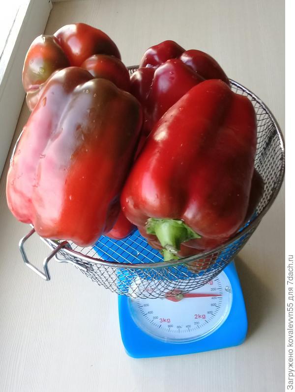 Вес перцев с тестируемого куста