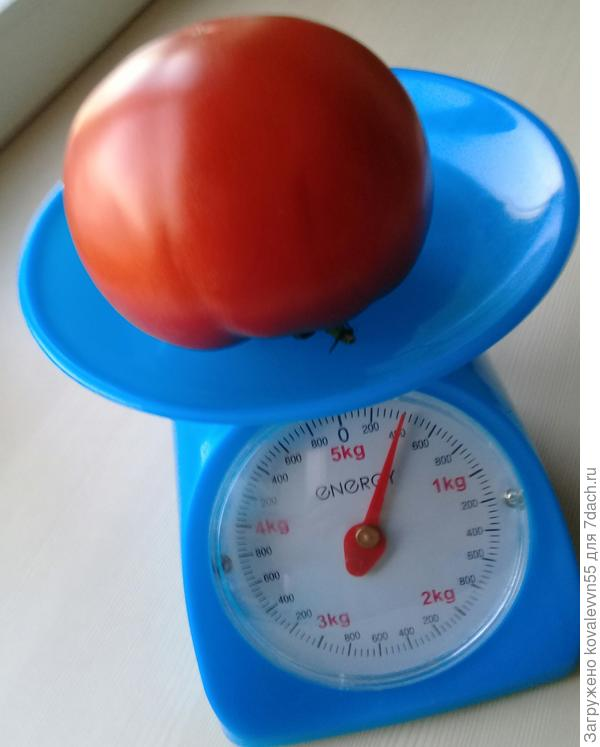 Вес самого крупного томата 100% - 400г.