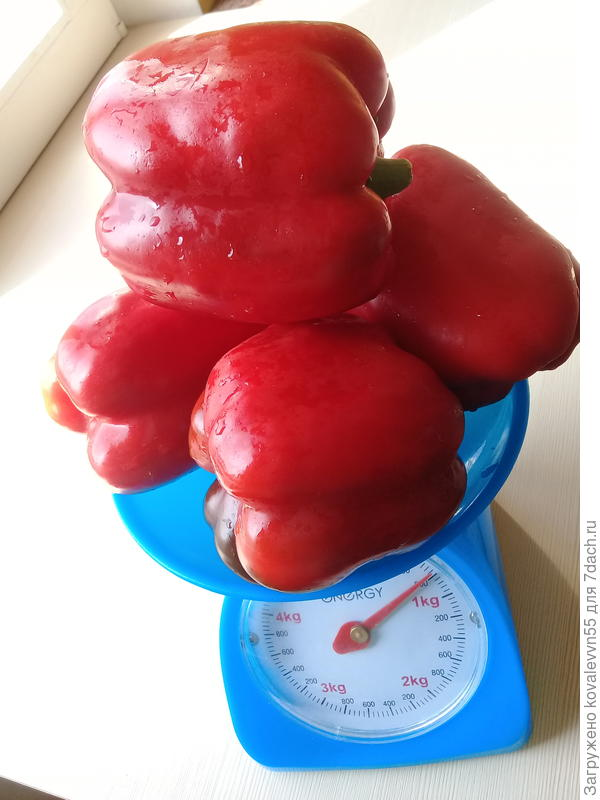 Вес перцев