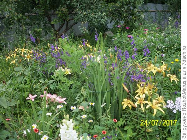 Сиреневый колокольчик на клумбе с лилиями