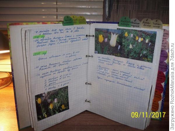 Внутри пишу сведения о посадке и выкопки, делаю для себя выводы, когда это делать удачнее всего. Записи делаю в свободное время с черновика, обычной тетрадки в клетку, которую беру с собой в сад