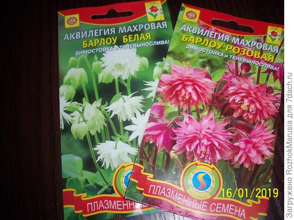 Пакетики семян аквилегии