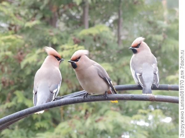 Очень серьезные птицы.