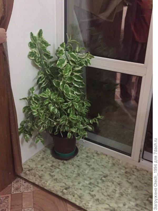Подскажите пожалуйста , что это за растение ?