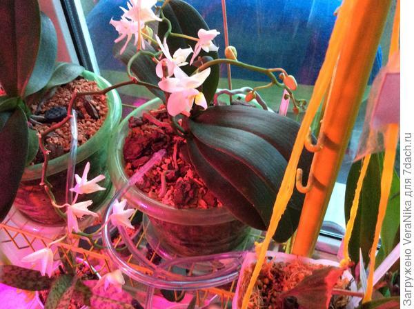 цветы которые ростут у меня дома