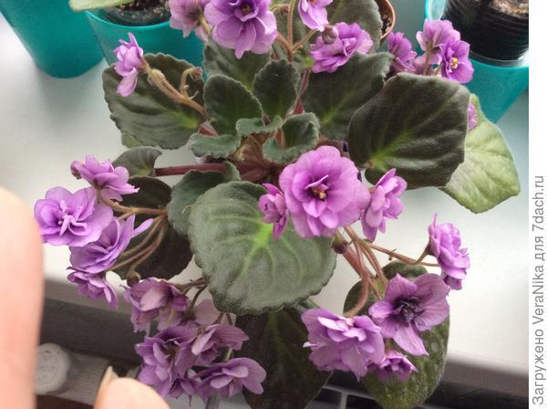 Видео «Мои воспоминания о прекрасном!» Мои цветущие комнатные растения!