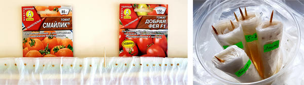 Томаты 'Смайлик' и 'Добрая Фея' F1: на шаг ближе к томатному изобилию