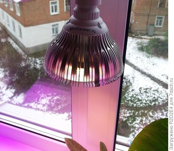 Так светится диодная лампа фуллспектр.