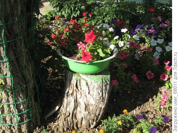 Я украшаю сад клумбами