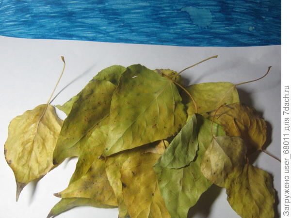 """Подбираем листья для  """"Осенней композиции"""" и сушим их"""
