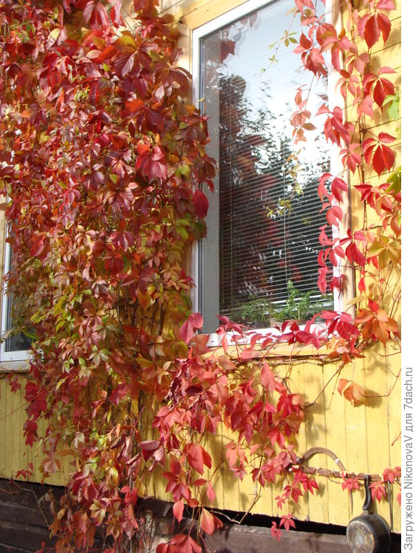 Осенняя сказка у окна