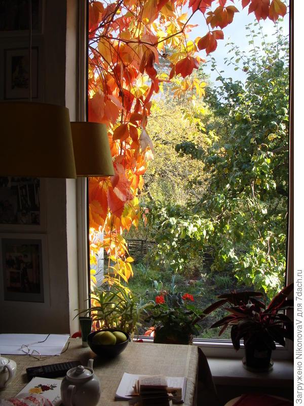 Осенняя сказка за окном