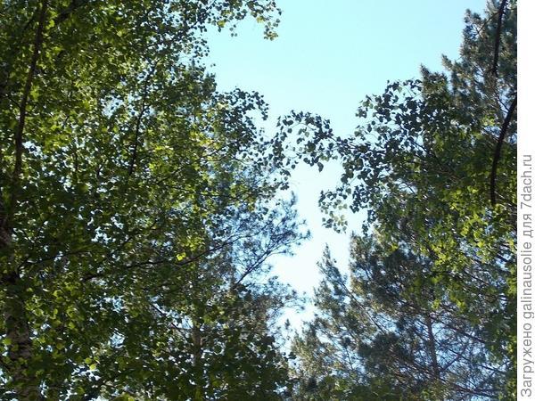 лес на даче