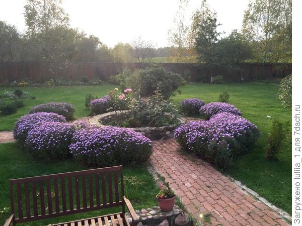 Любимый дачный уголок особенно красив осенью,когда цветет бордюрная астра))